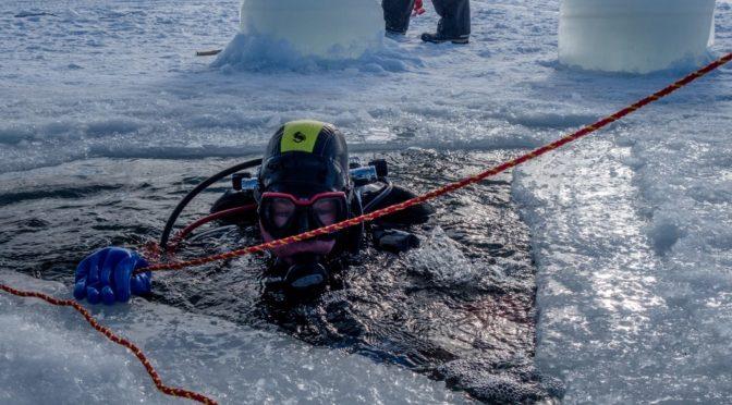 Delfiinien talvipäivä action